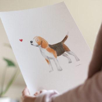Lámina Beagle. La nueva lámina de la colección MIS PERROS FAVORITOS.