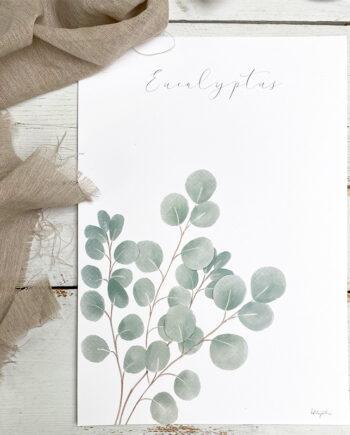 Lámina Eucalipto. La Tortuguita Blanca